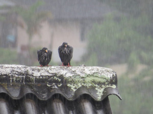 Birds2414001_1280
