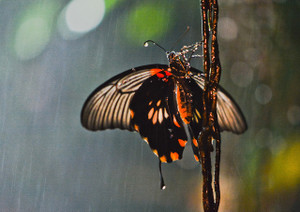 Butterfly2042895_1280