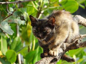 Kitten632633_1920