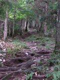 RIMG0015夏の登山道2