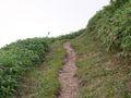RIMG0020夏の登山道4