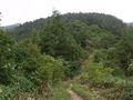 RIMG0017夏の登山道3向こうに頂上