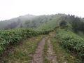 RIMG0021夏の登山道5