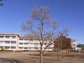RIMG0024すでに実の付いた木