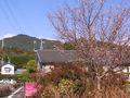 RIMG0046本宮山と桜2